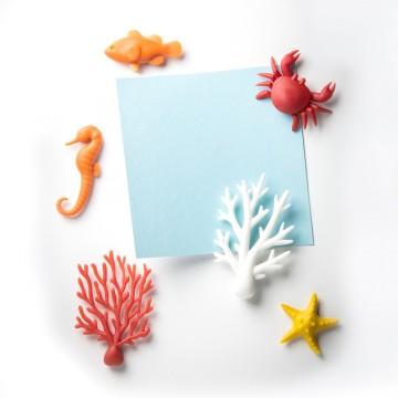 Ocean Ecology Magnet Set