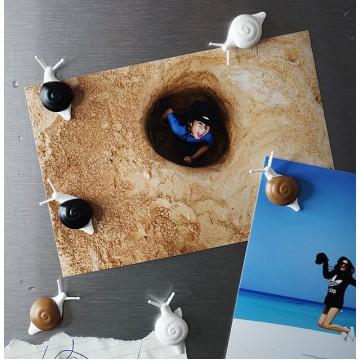 Snail Magnet Set